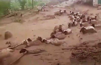 Видео. Тажикстанда катуу сел жүрүп бир нече айылдарды кыйратып кетти